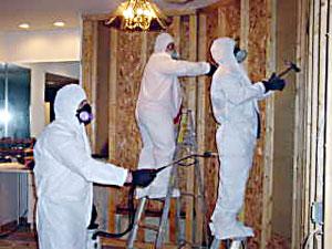 Mold Removal Kansas City